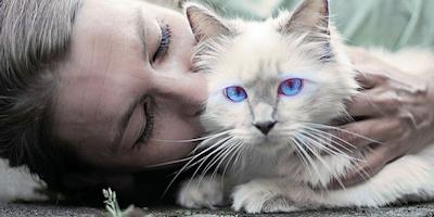 853ae7033fc7 11 λόγοι που οι γάτες μπορούν να μας κάνουν πιο ευτυχισμένους